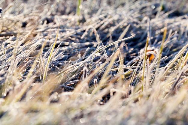 L'erba è verde, ricoperta dal primo gelo. autunno, ma non inverno.