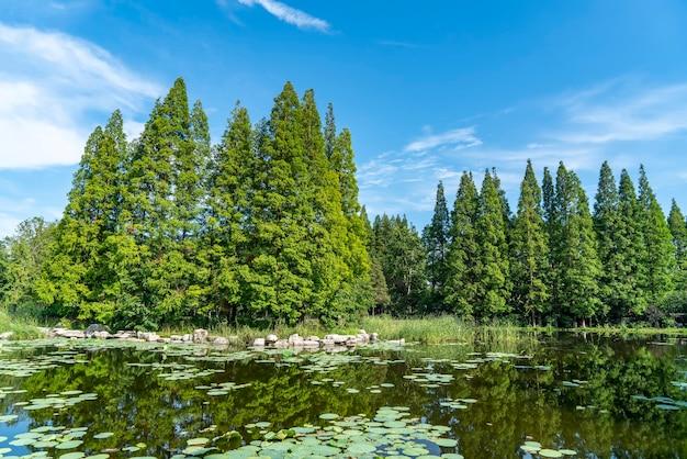 Erba e alberi nel parco sotto il cielo azzurro