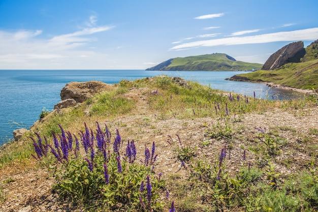 Erba con fiori viola, dietro il mare e le montagne sullo sfondo. il tempo è soleggiato, cielo nuvoloso