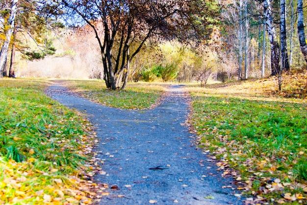 Crocevia di percorso a piedi di ghiaia nel parco in autunno, concetto di scelta del modo