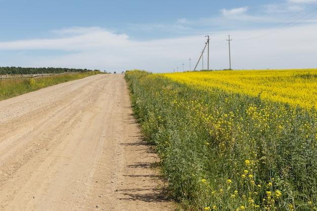 Strada sterrata in un campo fiorito di colza. giornata di sole estivo.