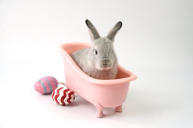 Un coniglietto grigio in una vasca da bagno rosa con le uova di pasqua poste lateralmente su un bianco