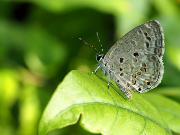 Farfalla grigia su foglia verde guardando superiore
