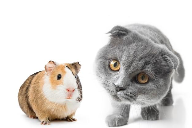 Gatto e cane grigi con bellissimi occhi su una superficie bianca