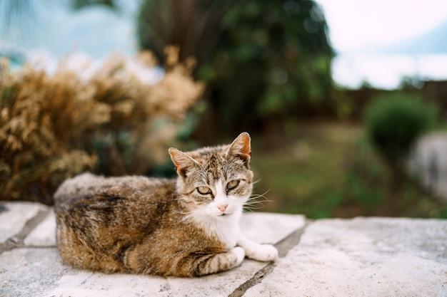 Il gatto grigio si posa su uno sfondo sfocato di alberi ed erba.