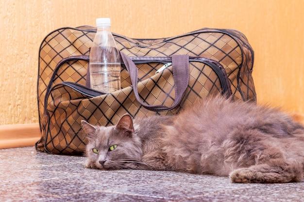 Il gatto grigio è sdraiato vicino a una valigia e una bottiglia d'acqua. aspettando il treno alla stazione dei treni. passeggero con valigia in viaggio