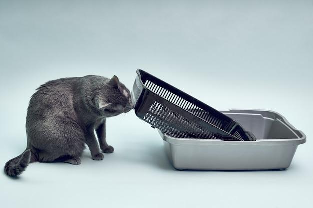 Gatto grigio vicino al nuovo vassoio per gatti