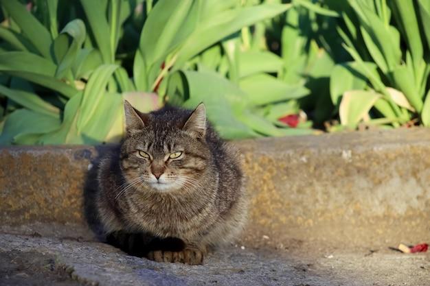 Un gatto grigio si siede sull'asfalto vicino a un'aiuola