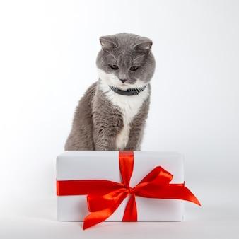 Un gatto grigio si siede vicino a un regalo con nastro rosso su bianco.
