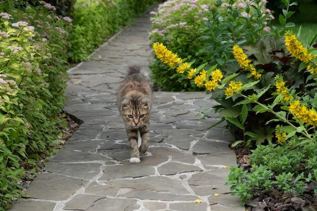 Gatto grigio che cammina per strada in giardino