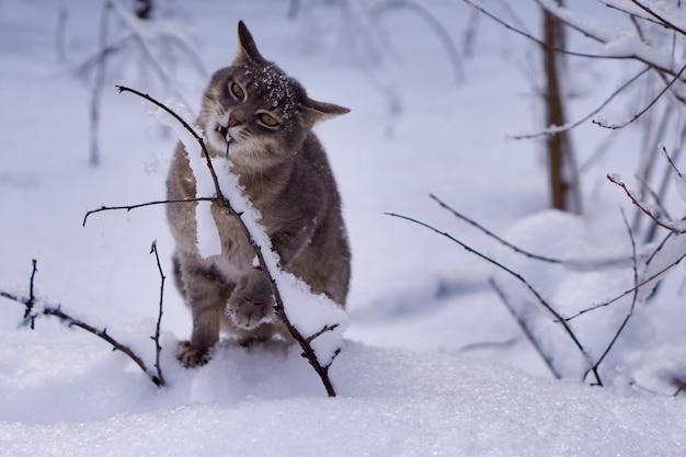 Gatto grigio su sfondo bianco della neve