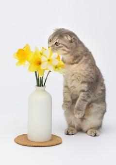 Gatto grigio con fiore su superficie bianca