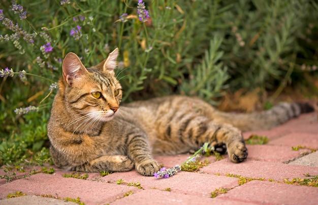 Gatto grigio con gli occhi verdi gatto seduto vicino alla casa. gatto birichino, bellissimo animale da compagnia. gatto selvatico esterno. gatto in strada