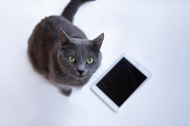 Il gatto lanuginoso grigio si siede su uno sfondo bianco con telefoni cellulari e