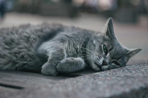 Un gatto grigio peloso con gli occhi verdi è sdraiato su una panchina nel parco.