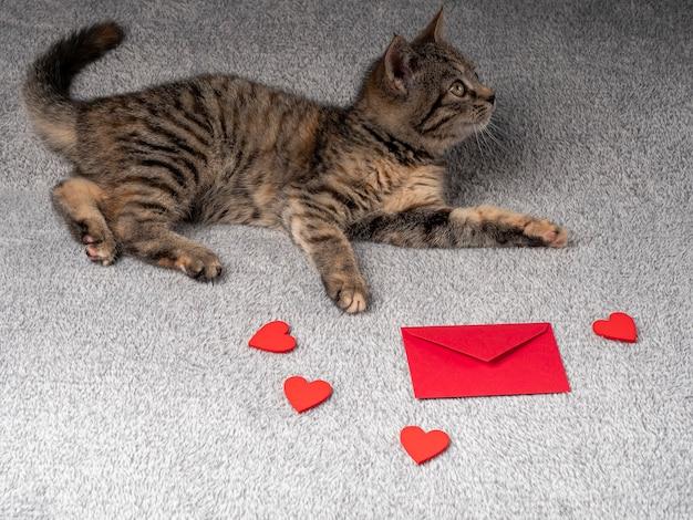 Il gattino grigio si trova e guarda di lato, una busta rossa