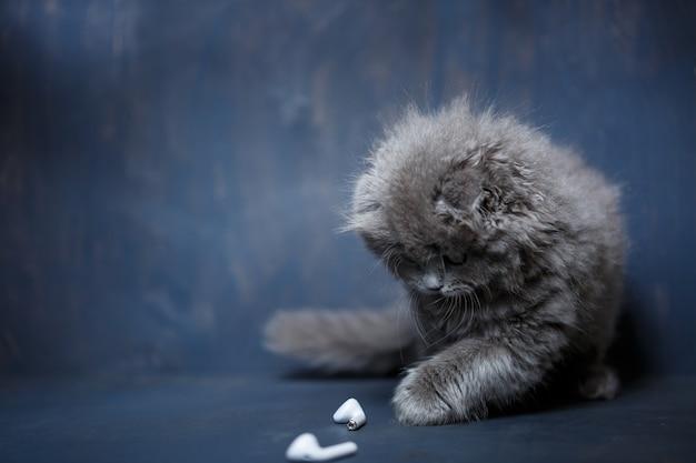 Il gattino grigio scozzese gioca con le cuffie bianche senza fili