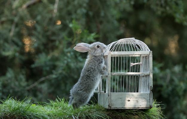 Coniglio grigio che spinge la gabbia