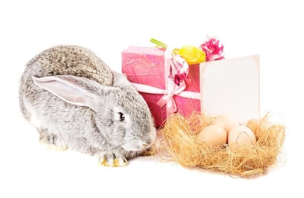 Coniglio grigio con tulipani, uova, confezione regalo e biglietto di auguri su bianco