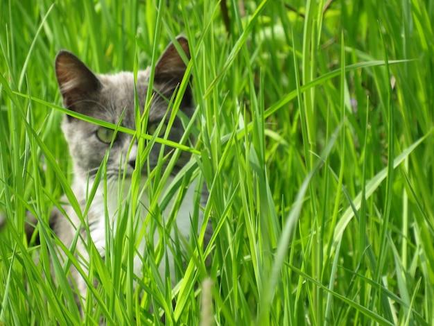 Piccolo gatto grigio nell'erba verde