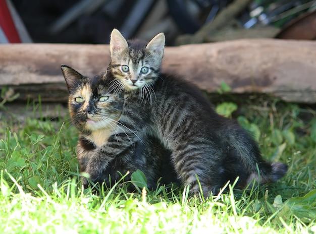 Adorabile gattino tabby a strisce grigie e sua madre che giocano all'aperto