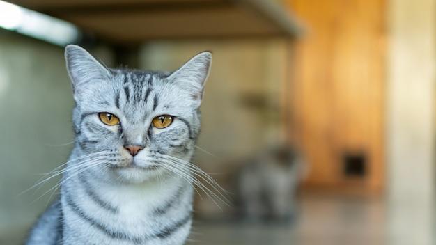 Gatto a strisce grigio che si siede nella stanza
