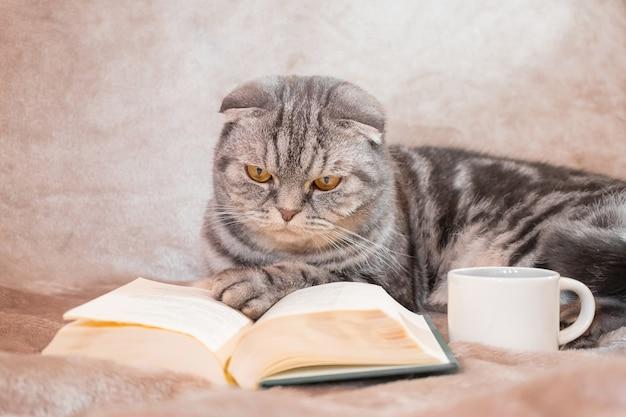 Un gatto scottish fold a strisce grigie con gli occhi gialli si siede su una coperta con un libro e una tazza