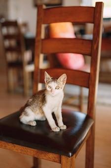 Il gatto grigio e bianco è seduto su una sedia con schienale in legno e sedile in pelle