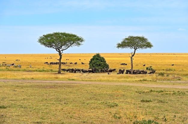 Grande migrazione di gnu nella savana africana