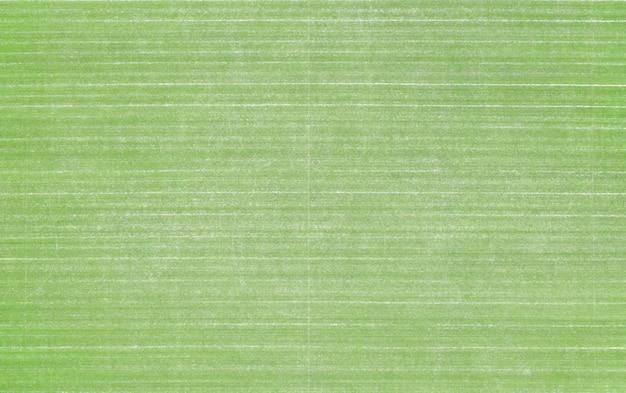 Grande trama di erba del prato da golf, cortile o stadio di calcio.
