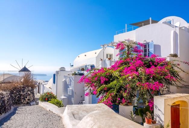 Grecia. giornata di sole estivo in una strada deserta oia sull'isola di santorini. un grande cespuglio fiorito e un mulino a vento in lontananza