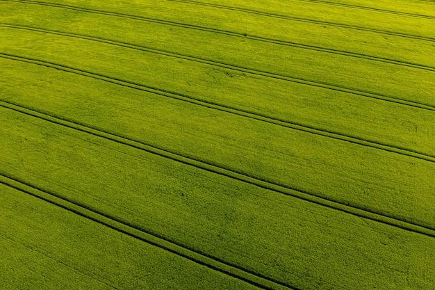 Campo agricolo verde dall'alto con strisce, motivo naturale astratto