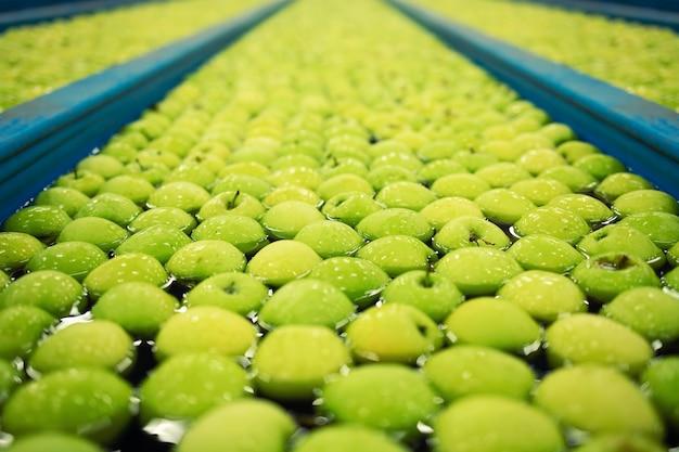 Mele verdi trasportate in una fabbrica di trasformazione alimentare.