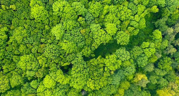 Foresta verde autunnale o primaverile. vista dal drone, un bellissimo paesaggio estivo. sfondo astratto naturale