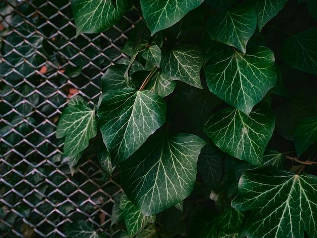 Sfondo verde di foglie.