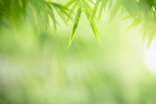 Foglia di bambù verde su sfondo verde sfocato