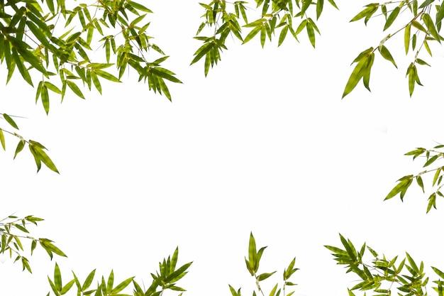 Foglia di bambù verde isolata su una priorità bassa bianca con lo spazio della copia.