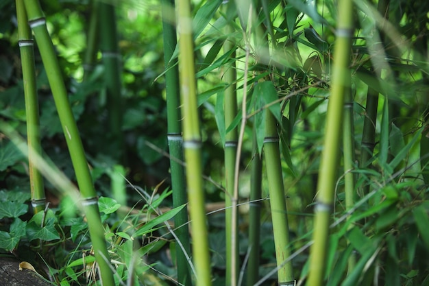 Trama di bambù verde, bellissime foglie verdi e steli