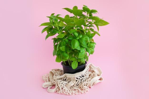 Pianta di basilico verde in vaso nero con un sacchetto di corda su una rosa.