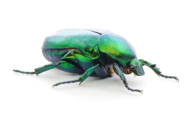 Insetto dello scarabeo verde isolato su bianco.