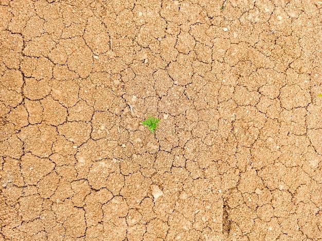 Il filo d'erba verde germogliava dal terreno secco e screpolato, il concetto della giornata terrestre. la forza vitale della natura.