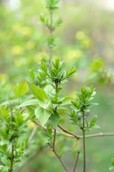 Foglie fiorite verdi sui rami