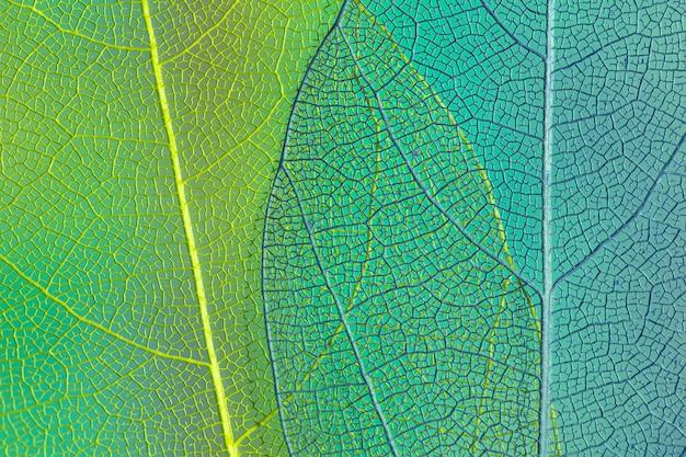 Foglie trasparenti verde e blu