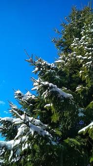 I rami verdi hanno mangiato nella neve
