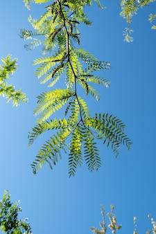 Rami verdi di un albero su sfondo blu