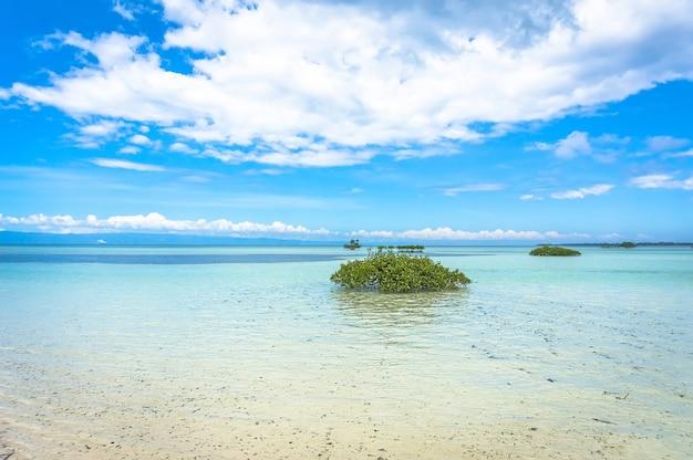 Cespugli verdi in acqua limpida su uno sfondo bellissimo