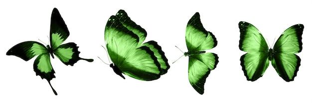 Farfalle verdi isolate su sfondo bianco. falene tropicali. insetti per il design. colori ad acquerello