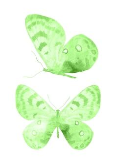 Farfalle verdi isolati su sfondo bianco. falene tropicali