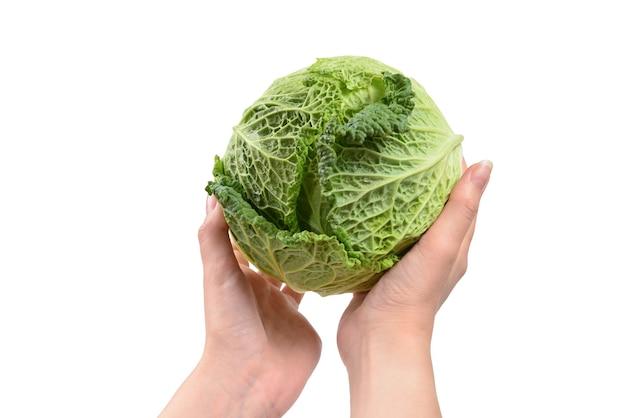 Cavolo verde isolato su sfondo bianco. nelle mani della donna.