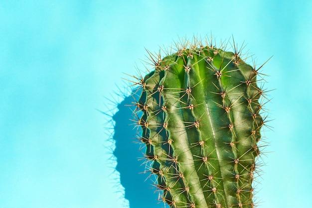 Stile estivo di cactus verde. sfondo blu.